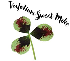 Trifolium Sweet Mike